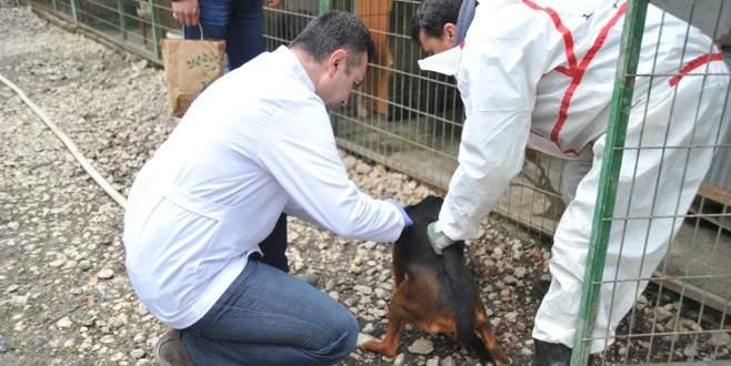 Av köpeklerine aşı