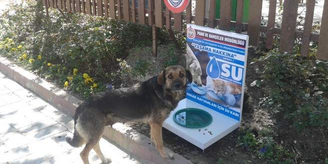 Sokak hayvanları için suluk