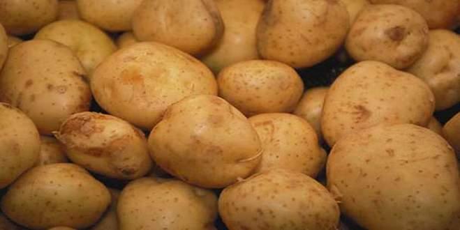 Patates hasadı başladı, fiyatlarda düşüş bekleniyor