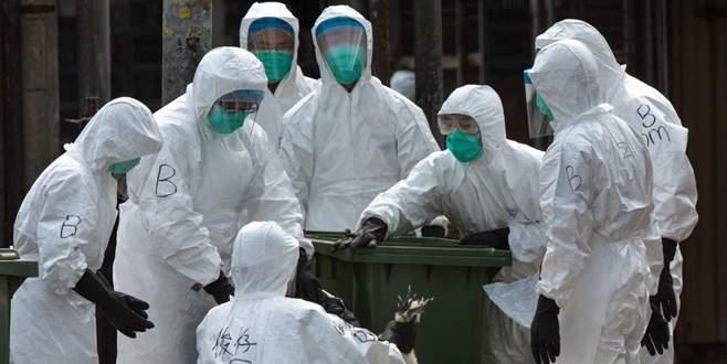 Bu ilde kuş gribi virüsü tespit edildi