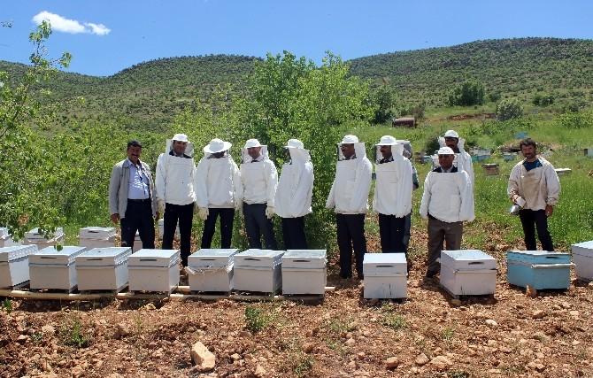 Savur'da Arıcılık Projesi Hayata Geçirildi