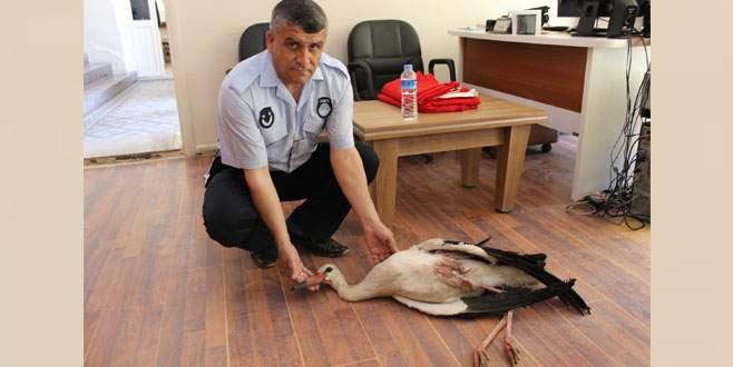Bursa'da yaralı leyleğin imdadına belediye ekipleri yetişti