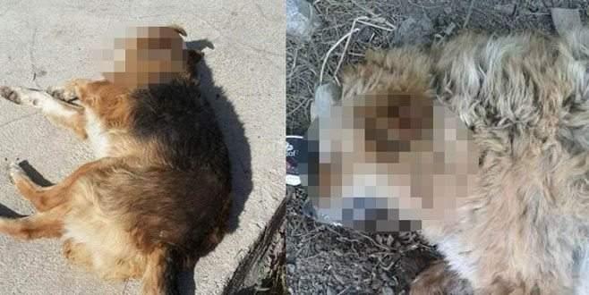 15 köpek bu halde bulundu