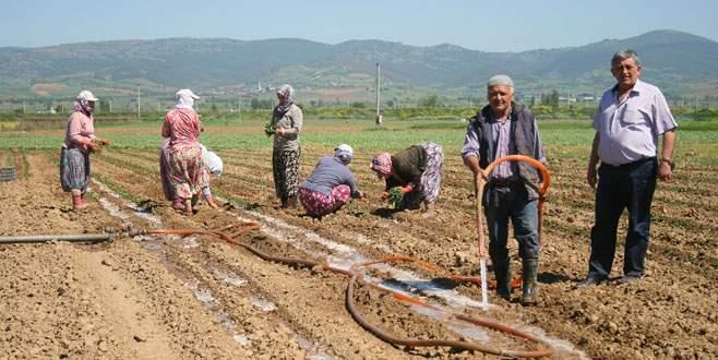 Çiftçi planlı ekim istiyor