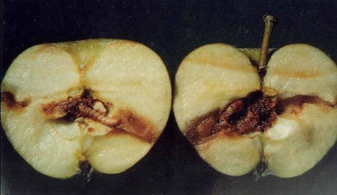 Meyve Üreticilerine Uyarı