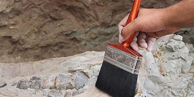 Kanada'da 68 milyon yıllık dinozor fosili bulundu