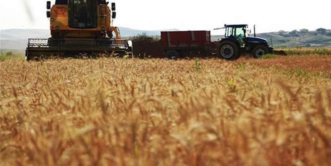 Buğdayda rekolte beklentisi yüksek