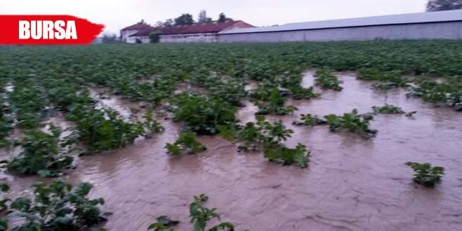 Dereler taştı, ekili araziler sular altında kaldı