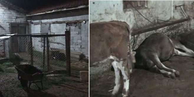 Mandıraya yıldırım düştü 15 hayvan telef oldu