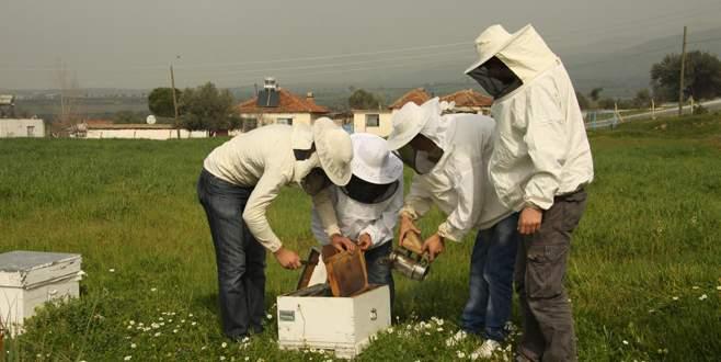 Arıcılara destekleme başvuruları başladı