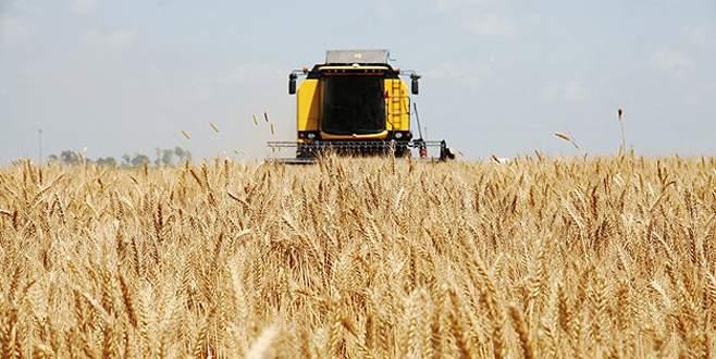 Buğdayda taban fiyat bekleniyor