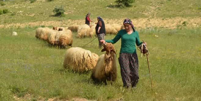Sertifikalı kadın çobanlar