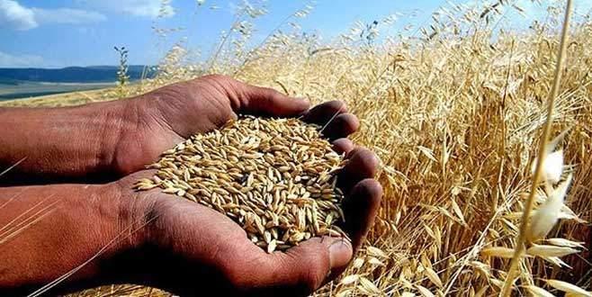 Bayraktar: Tarla ürünlerine geçişle fiyatlarda düşüş görülecek