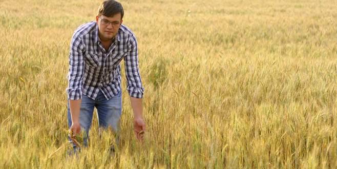 Buğday üreticisinde umutlu bekleyiş