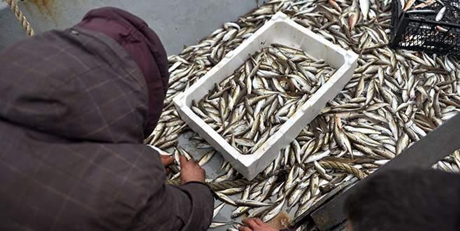 Kıyı balıkçıları en bereketli dönemini yaşıyor