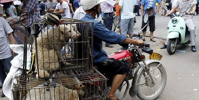 Çin'de 'köpek yeme' festivali