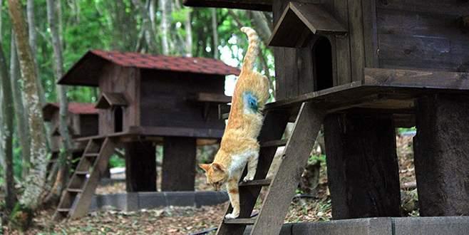 """Sokak kedileri için 5 yıldızlı """"Kedi Kasabası"""""""