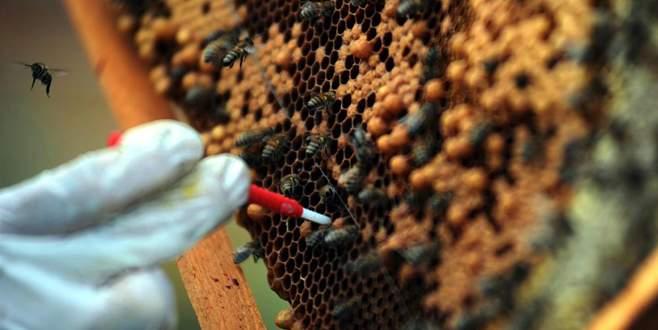 Ramazanda bol bol arı sütü tüketin!