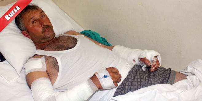 Bursa'da ayı dehşeti