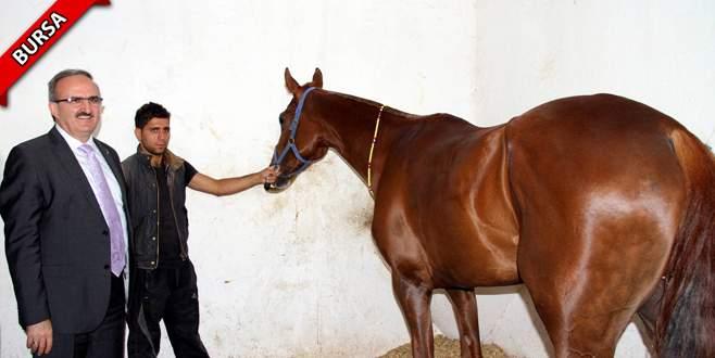 Paha biçilmez atlara dört dörtlük hastane