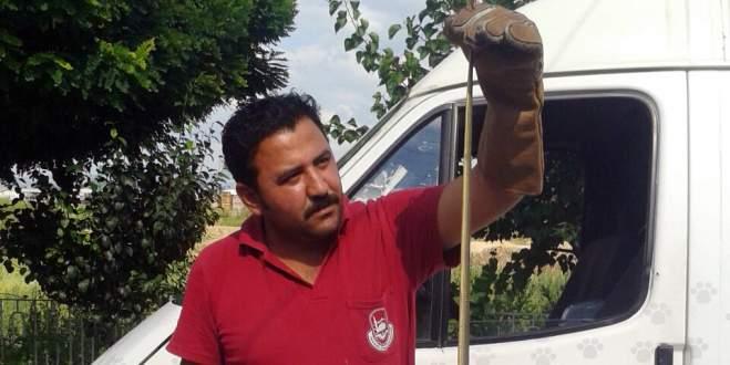 Bursa'da zehirli yılan paniği
