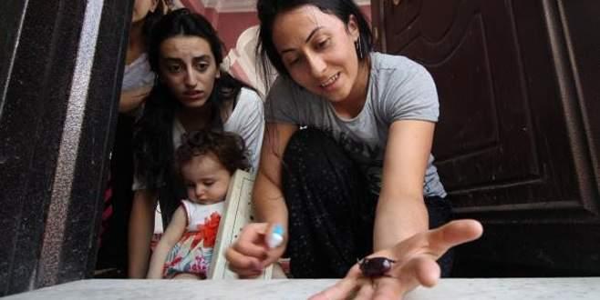 Dünyanın en değerli böceği Türkiye'de
