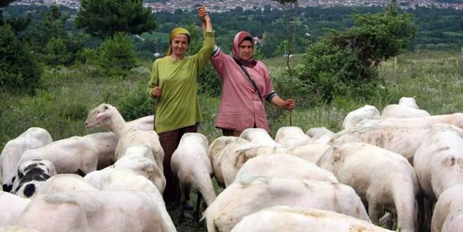 Öğretmenlikten vazgeçip çobanlığa gönül verdi