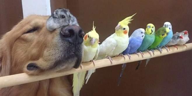 En sıradışı dostluk