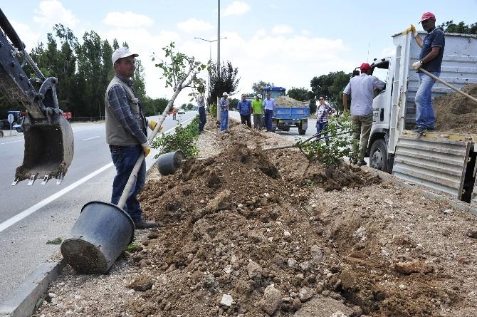 Karaman Belediyesi Yemyeşil Bir Karaman İçin Çalışıyor