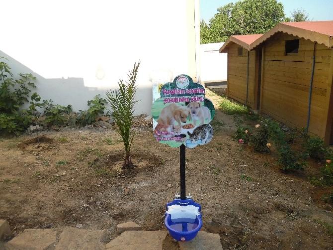 Gökçeada'da Sokak Hayvanları İçin Su Kabı
