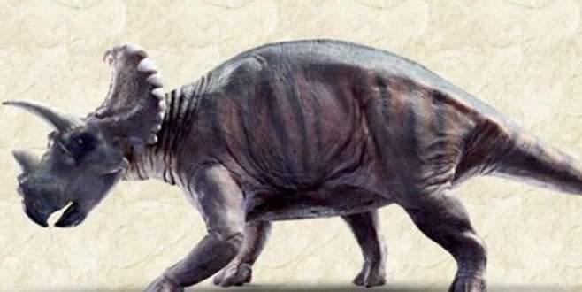 79 milyon yıllık dinozor fosili bulundu