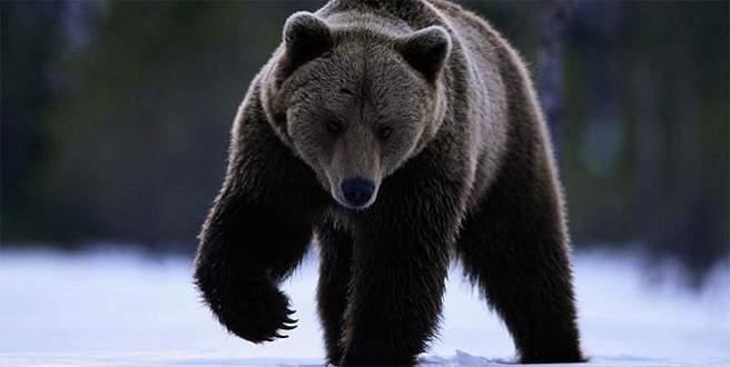 Beslediği yavru köpek ayı çıktı!
