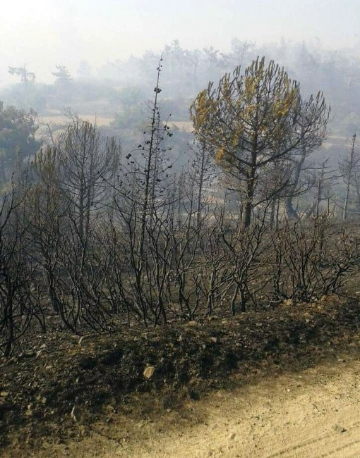 Kırkağaç'taki Orman Yangını Kontrol Altına Alındı