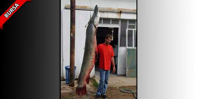 2,5 metrelik balık görenleri hayrete düşürdü