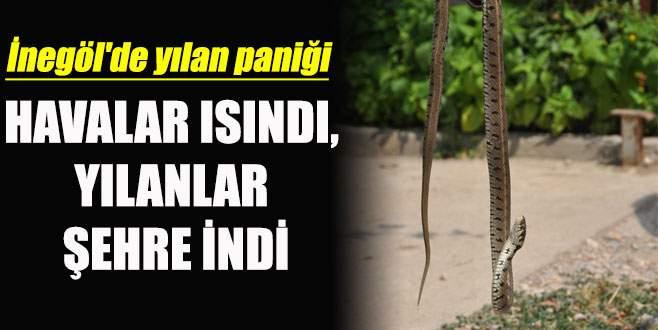 İnegöl'de yılan paniği