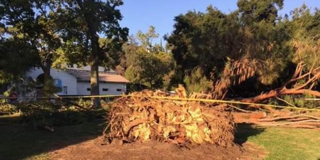 Çocukların üzerine ağaç devrildi: 8 yaralı