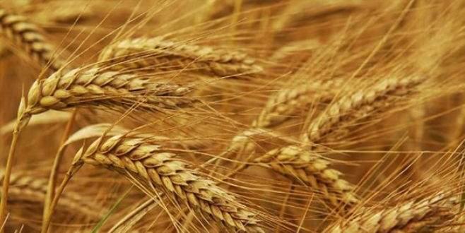 Toroslarda zorlu hasat dönemi