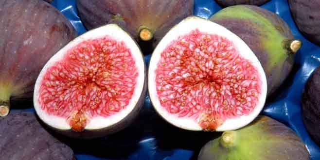 Bursa siyah inciri ihracatının arttırılması hedeflendi