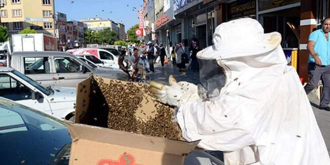 Kovanlarını terk eden arılar caddeyi sardı