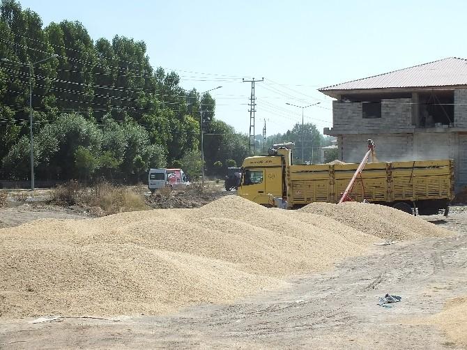 Malazgirt'te Buğday Alımları Başladı