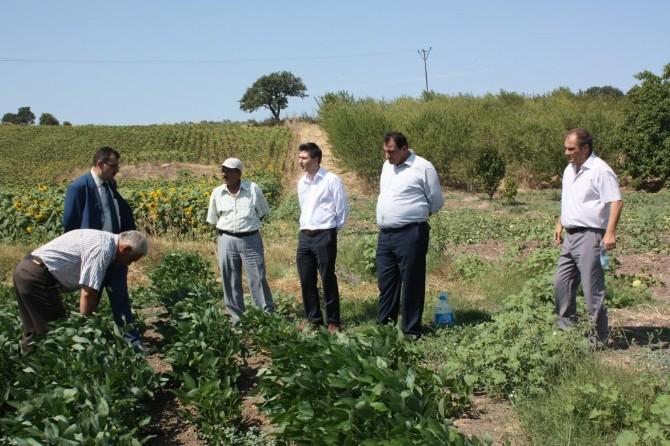 Soya Üretimini Arttırmak İçin Harekete Geçtiler