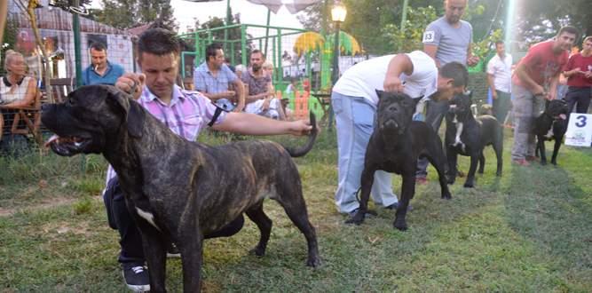 Mükemmel köpekler Bursa'da seçildi