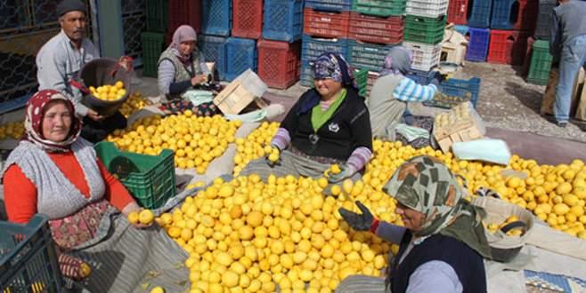 Limonda aracılar kazanıyor