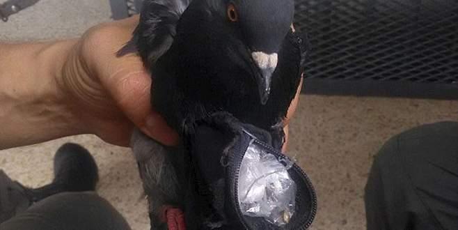 Güvercin tutuklandı