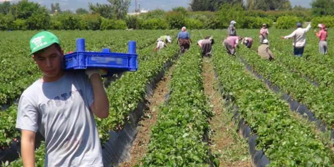 'Tarımdaki istihdam işsizliği azalttı'