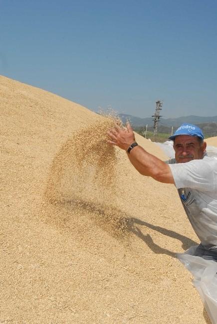 Ortaca TİGEM'den Buğday İhalesi