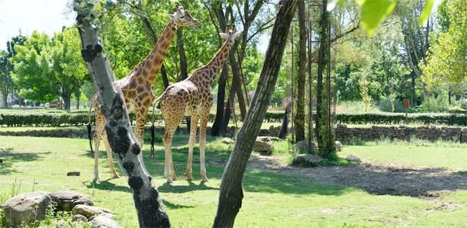 Bursa Hayvanat Bahçesi genişliyor