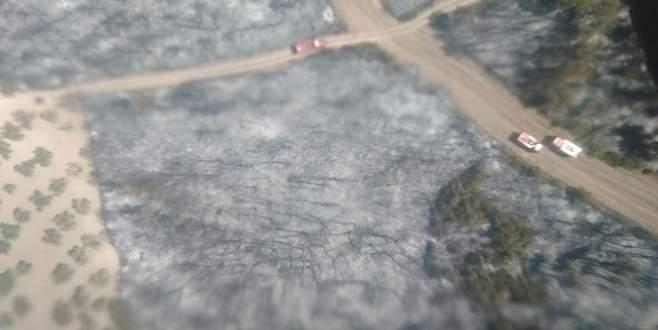 Yangından zarar gören 50 hektarlık alan…