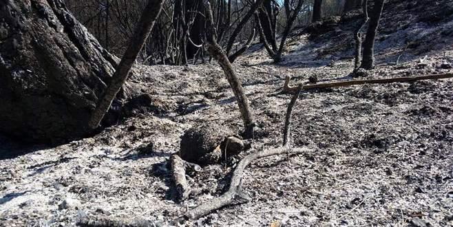 Yangın sonrası fotoğraflar yürek burktu