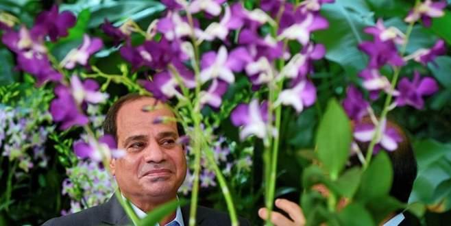 El Sisi orkidesi